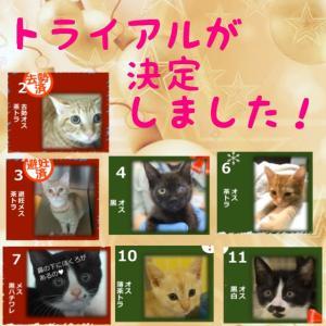 11月17日(日)の結果報告➡【猫の譲渡会@豊田市動物愛護センター】