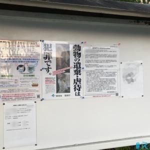 T5町の地域猫活動〜生き残った猫たち〜