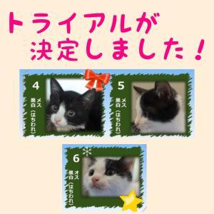11月20日の【猫の譲渡会@豊田市動物愛護センター】の結果報告