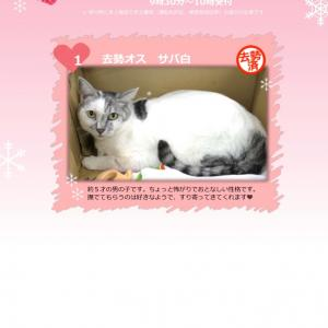 2月16日(日)開催【猫の譲渡会@豊田市動物愛護センター】