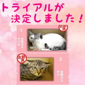 本日の【猫の譲渡会@豊田市動物愛護センター】の結果報告
