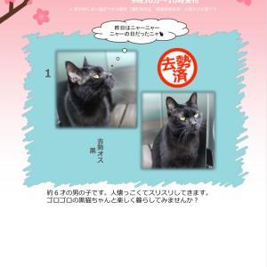 2月23日(日)開催‼️【猫の譲渡会@豊田市動物愛護センター】