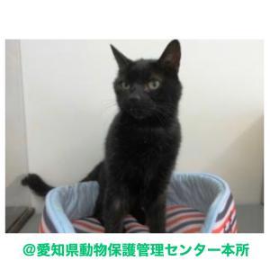 愛知県動物保護管理センター(本所)へ