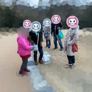 N8町の地域猫活動〜脱走からのご縁〜