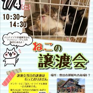 6月19日(金)譲渡会参加猫ちゃんです❤️