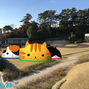T7町の地域猫活動〜新聞掲載からの依頼〜