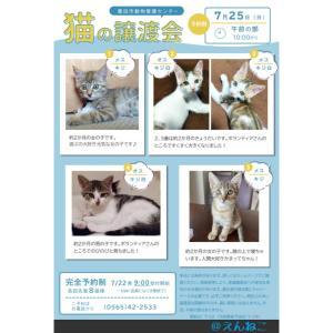 7月25日(日) 猫の譲渡会@豊田市動物愛護センター
