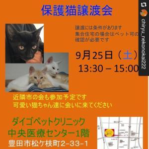 今週土曜日開催‼️→知立地域ねこの会さんの【保護猫譲渡会】