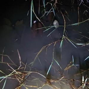 夜の魚取り