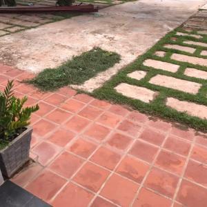 雨季の庭掃除