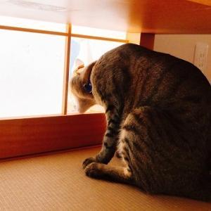 猫見障子、拡大中。