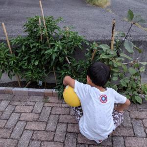 初めての家庭菜園101