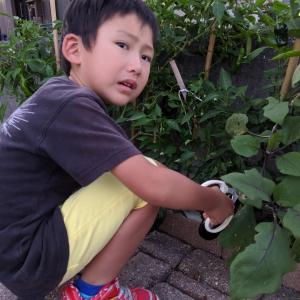 初めての家庭菜園103