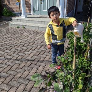 初めての家庭菜園113