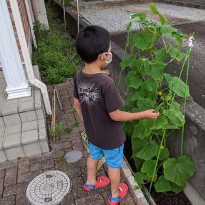 家庭菜園ブログ2020☘23