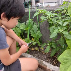 家庭菜園ブログ2021☘10