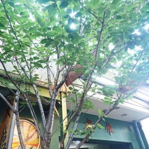 緑茂る真っ黒湯桜館