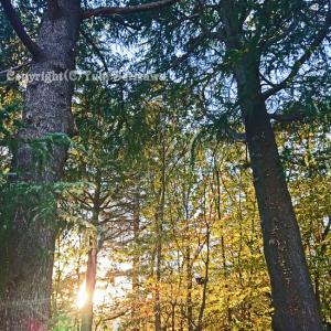 府中の森公園で小さい秋