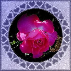 昨日も今日も手抜き夕食 & 名残りのバラ