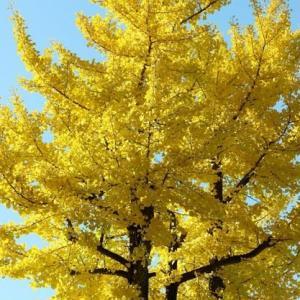 木々が黄金色に輝いていた