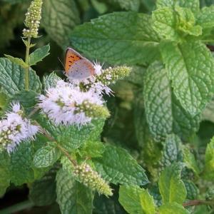 秋晴れの投票日 & ベニシジミ蝶