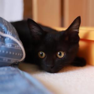 猫部屋でびゅ~