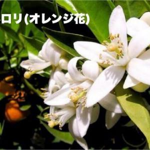 オレンジの花をティアラにした花嫁