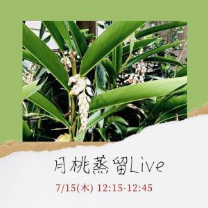 月桃蒸留シーンを生配信*7/15(木)12:15