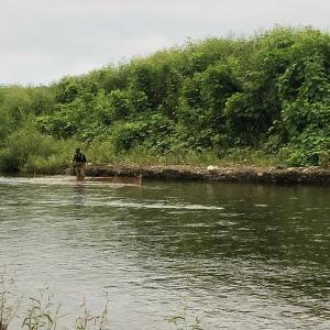 伝統漁法にて