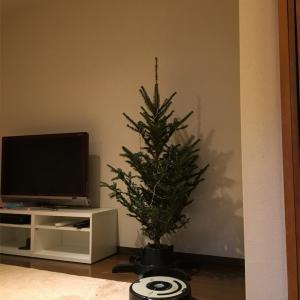 IKEAのもみの木