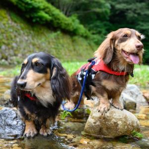 【犬連れキャンプ】みと自然の森 8.1