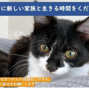 FIP子猫に支援のお願い
