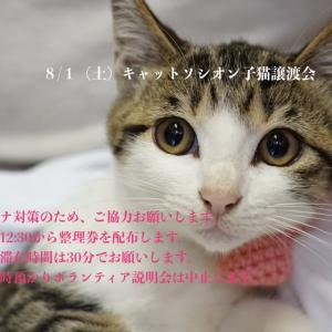 8月1日(土)譲渡会参加猫②