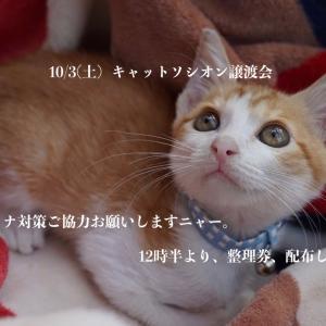 10月3日(土)譲渡会参加猫①②