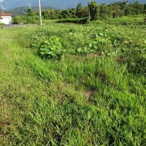 草刈り(9月12日)
