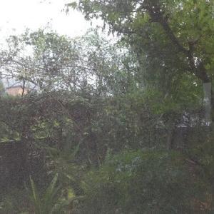 嬉しいな雨(R2.8.22)