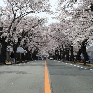 桜ツーリング ~夜の森の桜~