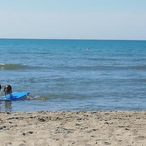 ドッグビーチに来るワンコ達