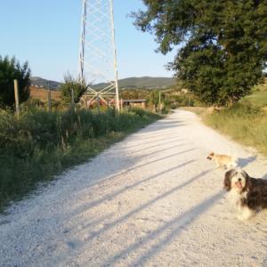 田舎の夕方散歩