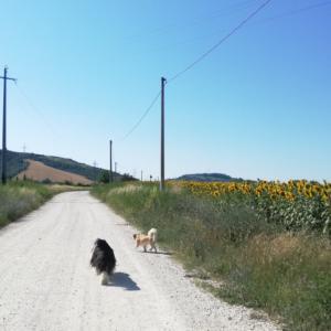ひまわり畑へ朝散歩