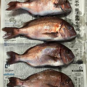 美浜フィッシングパーク 真鯛