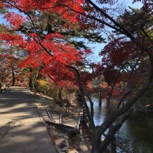 岡崎市東公園 紅葉