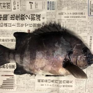 美浜フィッシングパーク 石鯛