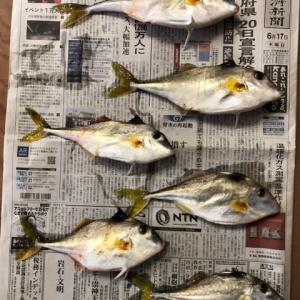 碧南海釣り広場 ギマと生ジョッキ缶