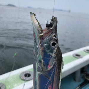 師崎沖 太刀魚釣り