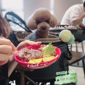 江東区 coume cafe
