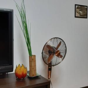 ■今年で扇風機はおしまい!サーキュレーターをフル活用
