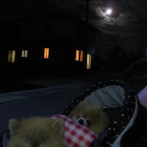 ボク達は月夜に歩いたんだ
