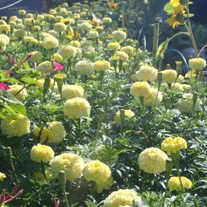 夏の花壇♪