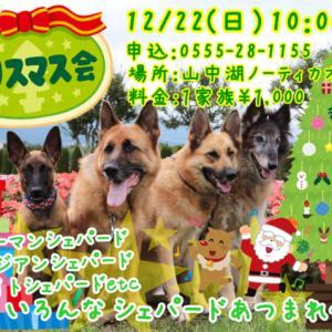 シェパードのクリスマス会開催決定!